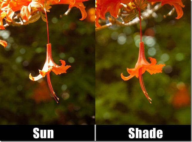 Sun-Shade